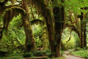regenwald-schuetzen